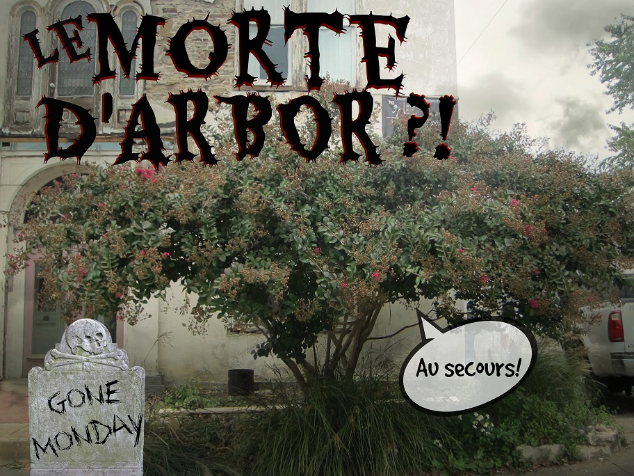Last Chance Landscaping: Crepe Myrtle TO DIE in 72 Hours