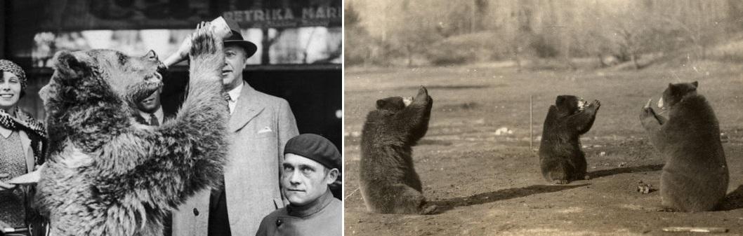 drinking bear vintge photo